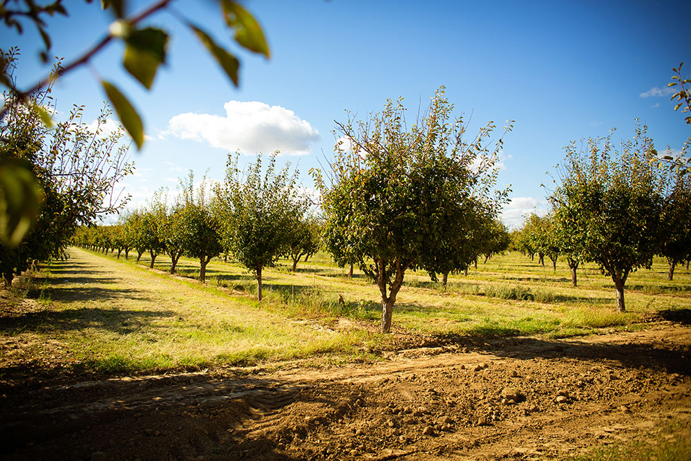 Danna Farms Orchard